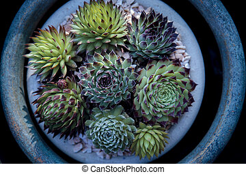 top view of succulent plant in planting pot