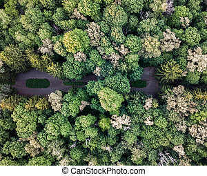 Top view of the green park on a summer day. Aerial view from the drone.