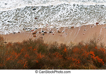 top view of the sea and the waves, sea buckthorn on the beach, top view of the sea and the waves