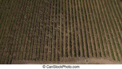 top view of the vineyards