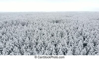 Top view of the winter forest. Aerial survey. - Top view of...