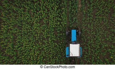 Tractor treats agricultural plants on the field, top view from height