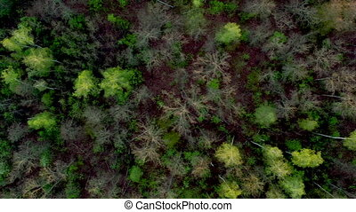 Top view of tree branches and ground after wide wildfire in ...