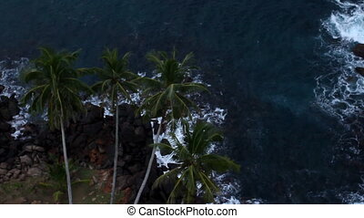 Top view of tree palm.