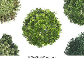 Top View of Trees