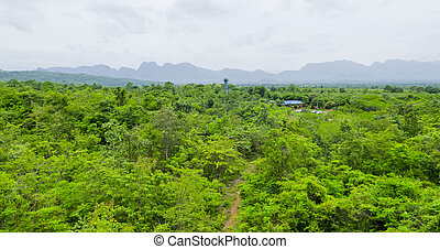 top view of Tropical rain forest in Thailand.