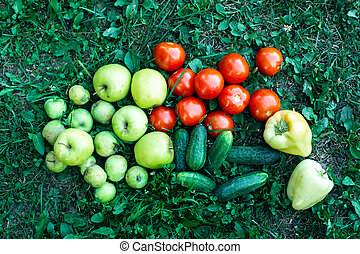 Top view of Vegetables lying in the grass. Cucumbers, tomatoes, peppers, apples.