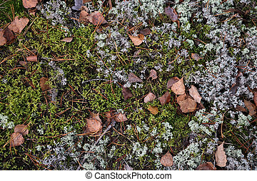 Top view of yellowed leaves and green moss. Background. Change of seasons. Fall.