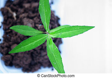 Top view of young green plant on soil