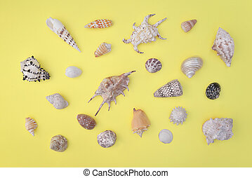 top view on a seashells collection of different shapes and arranged on the whole frame on yellow background