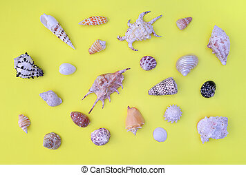 top view on a seashells collection of differetn shapes and aranged on the whole frame on yellow background