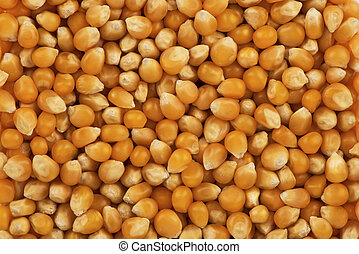 Top view on background texture of natural kernel of corn. Copy space for your text.