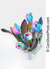 Top view on multi colored tulips