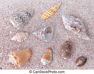 top view on seashells collection in pink sand