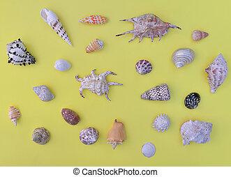top view on tropical seashells arranged on yellow background