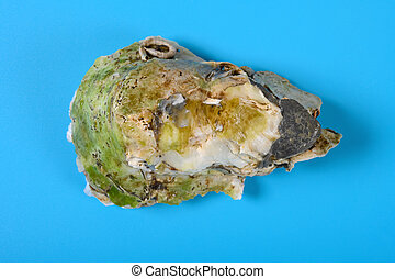 top view oyster shell on blue background
