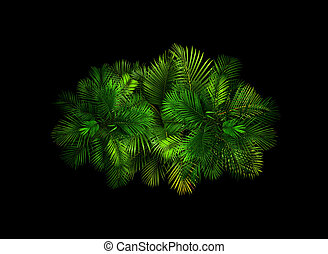 top view palm leaves tree on black background