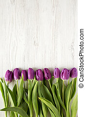 Top view, purple tulips on white wooden background. Flat lay, overhead, from above. Space for text.