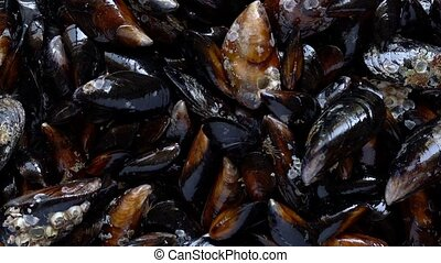 Top view raw sea mussels rotating 4k video