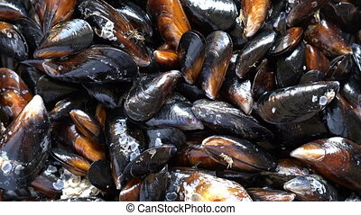 Top view raw sea mussels rotating