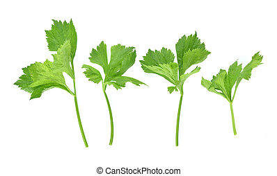 Top view set of celery isolated on white background