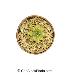 Top view small cactus isolated on white background