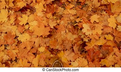 Top View Male Feet in Shoes Moving Forward on the Ground Covered with Fallen Yellow Leaves. Walking in the Autumn Park, Forest. Man's Legs Stepping on Fallen Orange Maple Leafs. Slow Motion. Foliage