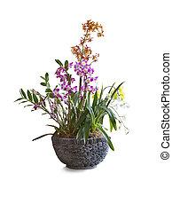 topf, blumenschmuck, hintergrund., orchideen, weißes