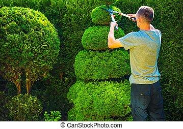 topiary, émondage, usines