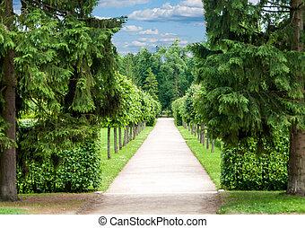 topiary, dokładnie, park, drzewa, aleja