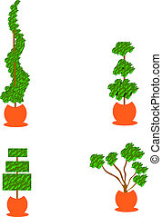topiary planters - four topiary styled evergreen plants in ...