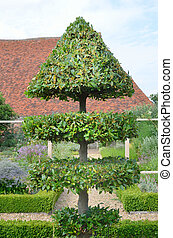 Topiary tree - Decorative trimmed tree