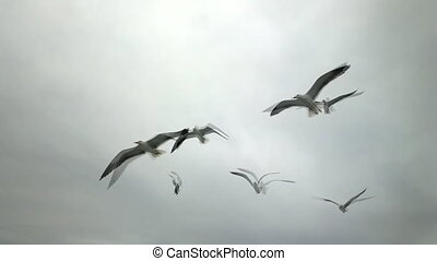 Topic of North sea travel - seagulls over waves