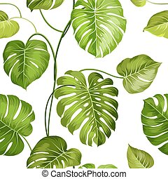 Topical palm leaves. - Topical palm leaves over white, ...