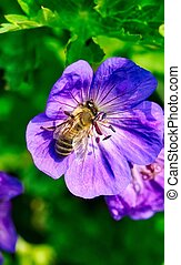 topo, flor, abelha