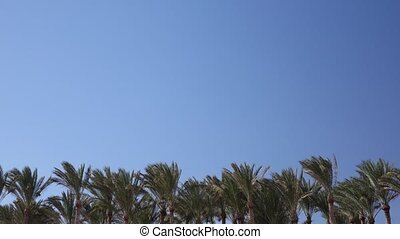 Tops of palm trees flutter from the wind in the sky flying plane