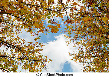 Tops of the trees golden autumn