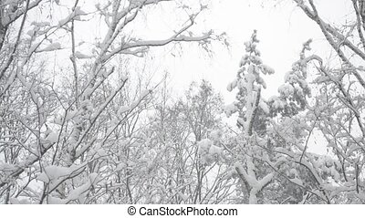 Tops of trees in a mixed forest swaying gently in wind in snow