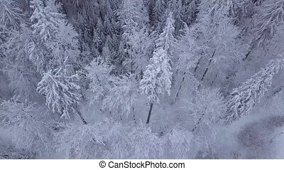 Tops of trees in snow - From above aerial view of silent...