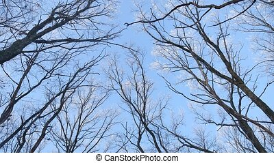 tops of trees in the snow frozen forest against the blue sky nature landscape winter