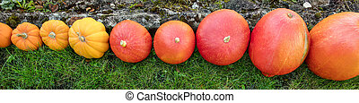 Topview, different sorts of pumpkins in a row, vegetables and autumn