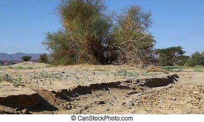 toqué, désert, terrestre