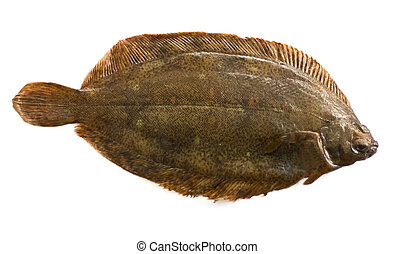 Torbay sole, or witch flounder (Glyptocephalus cynoglossus) ...