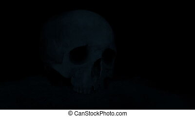 Torch Lights Up Skull On The Ground - Someone shines a torch...