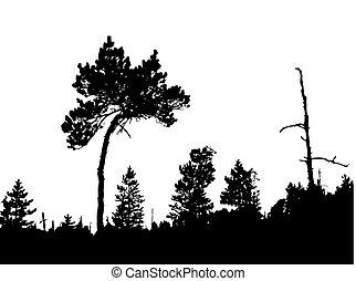 tordu, bois pin, silhouette