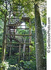 toren, birdwatching