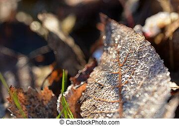 torka, blad, sol, frost, belyst, höjande