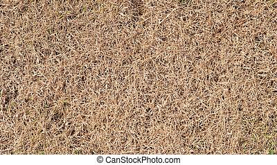 torka, gräs