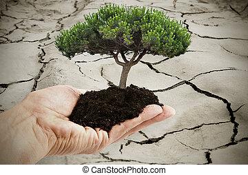 torka, land, träd, bakgrund, räcker
