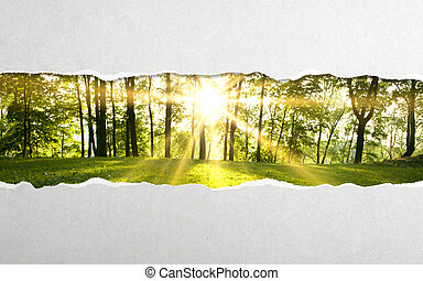 torn paper and  green forest background